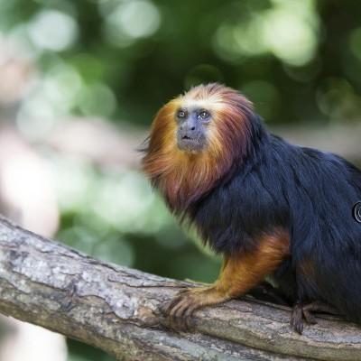 Vallée des singes 2014