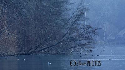 Promeenade aux étangs de Comelles (janv-2020)