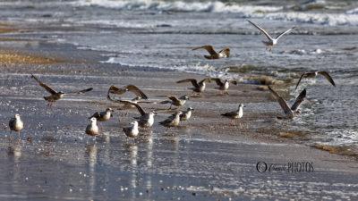 Après CIARA……DENNIS en baie de La Baule (fév.2020)