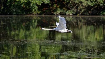 promenade photos aux étang de COMELLES – juin 2020