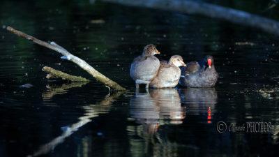 """Nouvelle visite """"nature"""" aux étangs de Comelles (21 juillet 2020)"""
